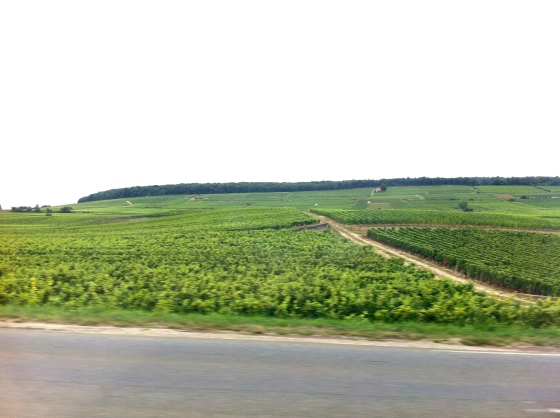 The vineyards of Burgundy
